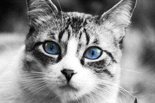 cat-255307_640