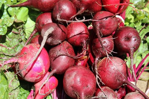 beets-1368370_960_720